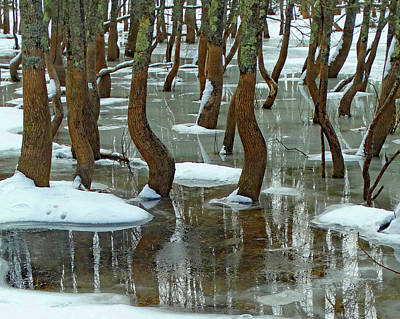 Photograph - Winter Dancing Trees 2 by David T Wilkinson