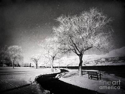 Photograph - Winter Darkness by Tara Turner