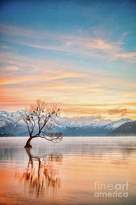 Photograph - Winter Dawn, Lake Wanaka Nz by Colin and Linda McKie