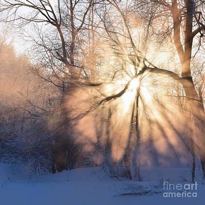 Photograph - Winter Dawn by Paul Davenport