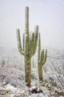 Rincon Photograph - Winter Day In The Desert Southwest  by Saija Lehtonen