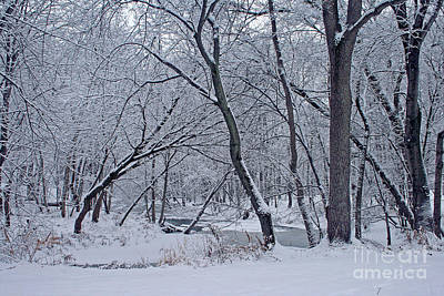 Photograph - Winter Days Along The Creek by Kay Novy