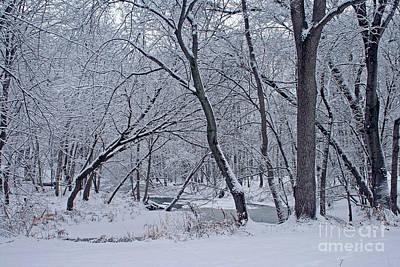 Photograph - Winter Days Along The Creek by Kay Novy