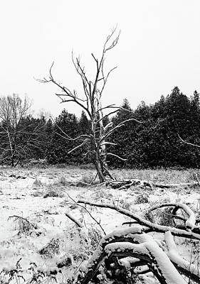 Photograph - Winter Deadwood Black And White by Debbie Oppermann