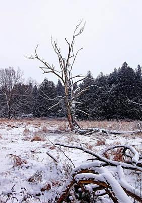 Photograph - Winter Deadwood by Debbie Oppermann