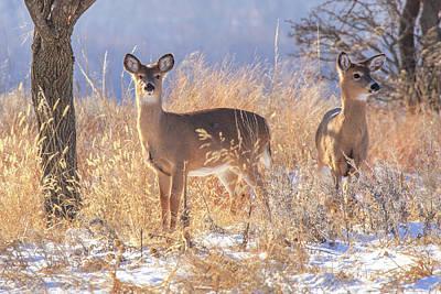 Winter Deer Art Print by Jill Van Doren Rolo