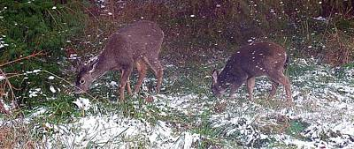 Photograph - Winter Deer by Lynn Bawden