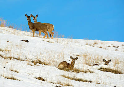 Art Print featuring the photograph Winter Deer by Mike Dawson