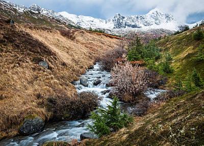 Photograph - Winter Descending by Tim Newton