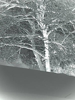 Photograph - Winter by Donna Lee