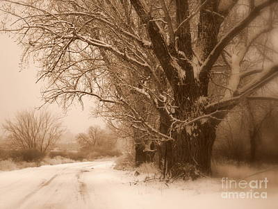 Country Lanes Digital Art - Winter Dream by Carol Groenen