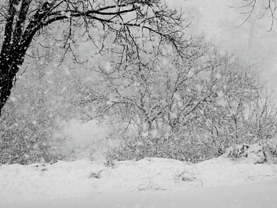 Photograph - Winter Dream by Mary Wolf
