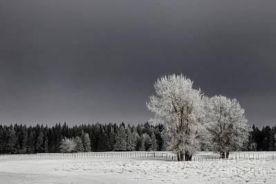 Photograph - Winter Dreamscape by Brad Allen Fine Art