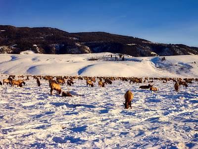 Photograph - Winter Elk Herd by L O C
