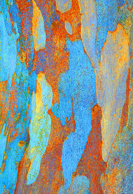 Photograph - Winter Eucalypt Abstract 2 by Margaret Saheed