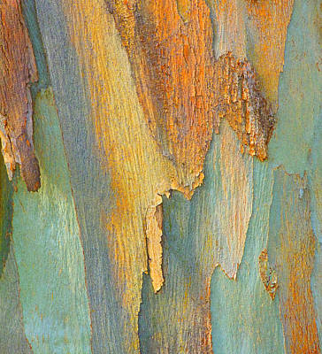 Photograph - Winter Eucalypt Abstract by Margaret Saheed