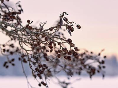 Photograph - Winter Evening by Jouko Lehto