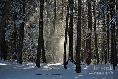 Photograph - Winter Falling Snow At Bigelow Hollow State Park  by Neal Eslinger