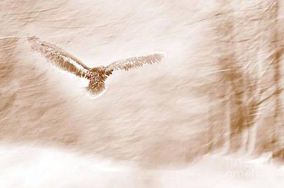 Sandra Silva Mixed Media - Winter Feathers by Sandra Silva