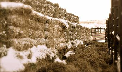 Photograph - Winter Feed Lot Horizontal by Amanda Smith