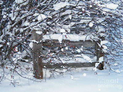 Photograph - Winter Fence by Ann E Robson