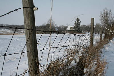 Photograph - Winter Fenceline Neighbors by Dylan Punke