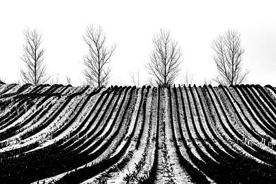 Photograph - Winter Fields by Mike Santis
