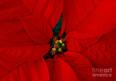 Photograph - Winter Fire by Alice Cahill