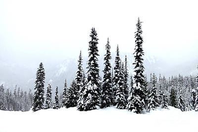 Photograph - Winter Firs by Tanya Searcy
