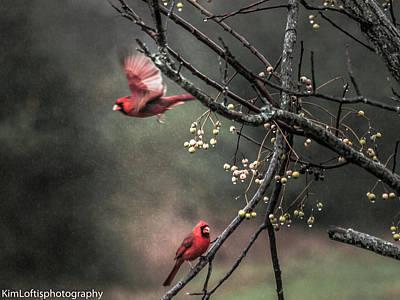 Photograph - Winter Flight  by Kim Loftis