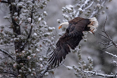 Snowstorm Photograph - Winter Flight by Sandy Sisti