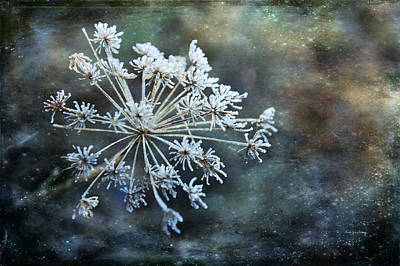 Photograph - Winter Flower by Randi Grace Nilsberg