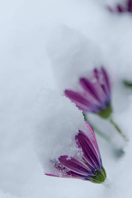 Wall Art - Photograph - Winter Flowers by Scott Hafer