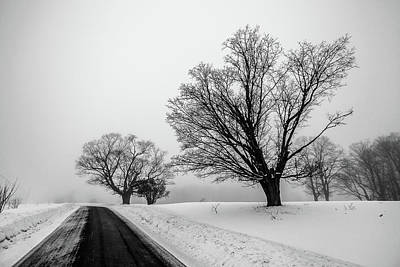 Photograph - Winter Fog And Maple Trees by Tim Kirchoff