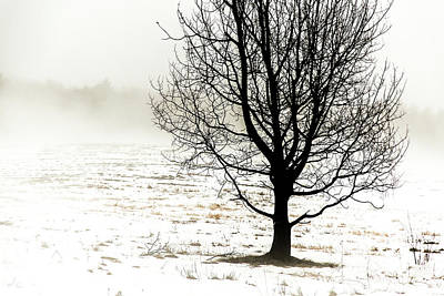 Photograph - Winter Fog And Tree by Tim Kirchoff