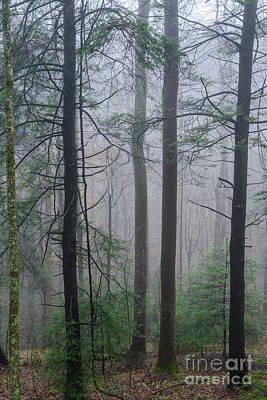 Photograph - Winter Fog Monongahela National Forest by Thomas R Fletcher