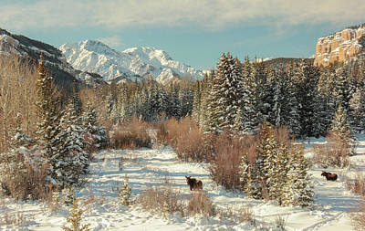 Photograph - Wyoming Winter by Angelique Rea