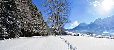 Photograph - Winter Forest And Mountains Panorama by Sabine Jacobs