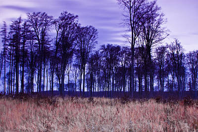 Art Print featuring the photograph Winter Forest At Sunset In Hungary by Gabor Pozsgai