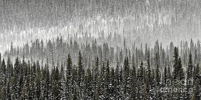 Photograph - Winter Forest by Brad Allen Fine Art