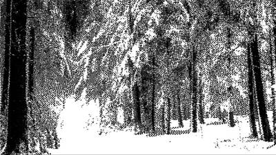 Drawing - Winter Forest Bw - Cross Hatching by Samuel Majcen