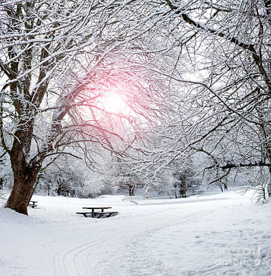 Winter Photograph - Winter Forest by Ezeepics