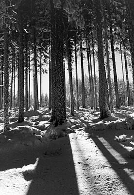 Winter Forest Print by German School