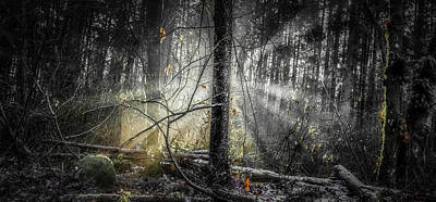 Travel Rights Managed Images - Misty Winter Forest Royalty-Free Image by Ken McAllister