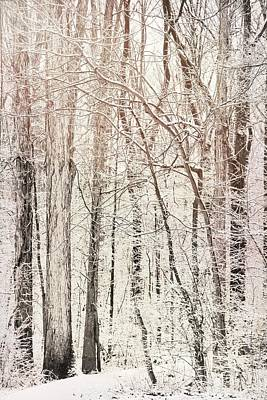 Photograph - Winter Forest Light by Dan Sproul