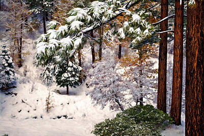 Photograph - Winter Forest by Maria Coulson
