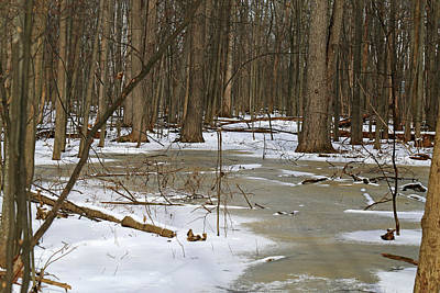Photograph - Winter Forest by Mary Bedy