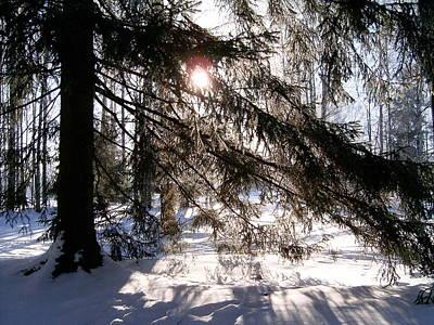 Photograph - Winter Forest by Masha Batkova