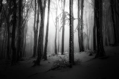 Photograph - Winter Forest  by Plamen Petkov