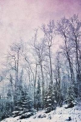 Birch Tree Photograph - Winter Forest by Priska Wettstein